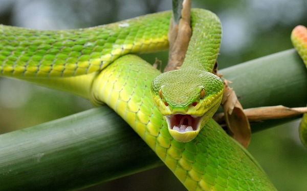 Green Green Snake Stock Photo Free Download