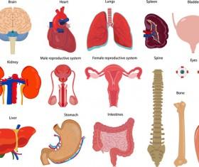 Human visceral organs illustration vectors set 01