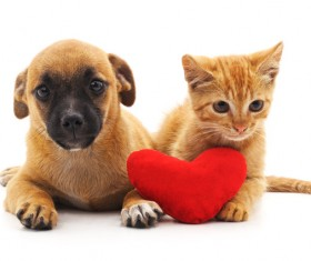 Kitten and puppy HD picture 01