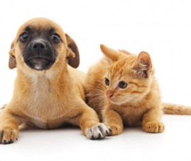 Kitten and puppy HD picture 02