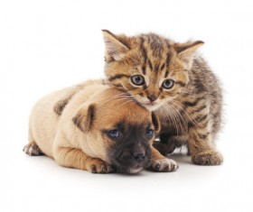 Kitten and puppy HD picture 03