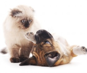 Kitten and puppy HD picture 04