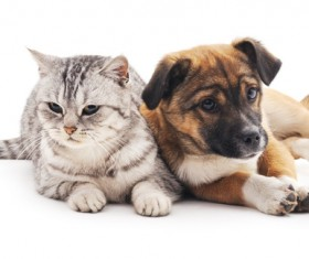 Kitten and puppy HD picture 06