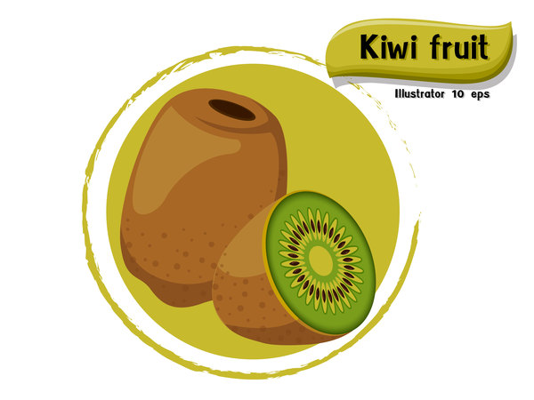 Kiwi fruit illustration vector