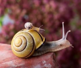 Macro photography snail Stock Photo