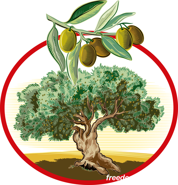 Olive treeIn circular frame vector