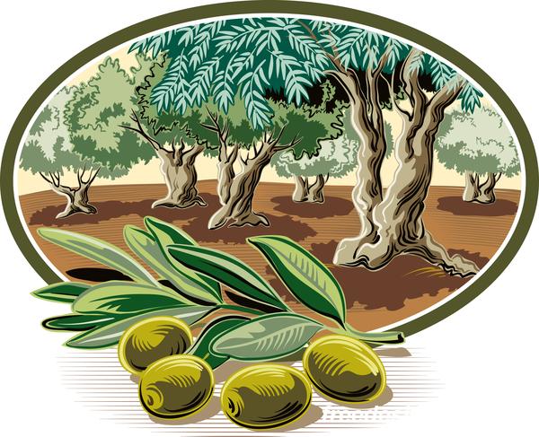 Olive treeIn oval frame vector 02