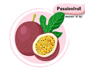 Passion fruit illustration vector