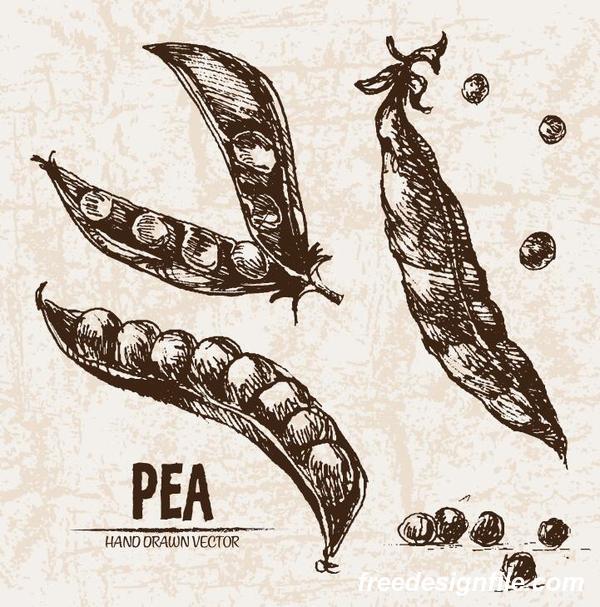Pea hand drawing retor vector 01
