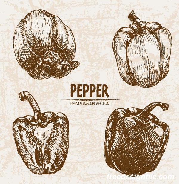 Pepper hand drawing retor vector 01