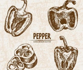 Pepper hand drawing retor vector 02