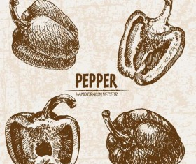 Pepper hand drawing retor vector 03