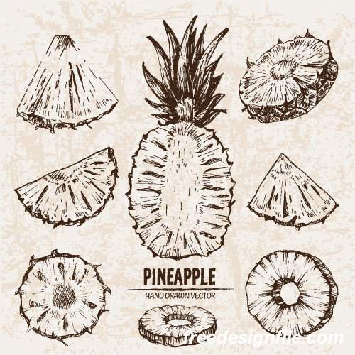 Pineapple hand drawing retor vector