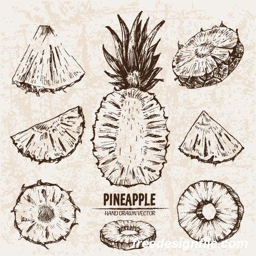 Pineapple hand drawing retor vector