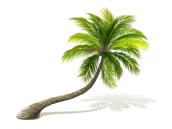 Realistic palm tree illustration vectors 01