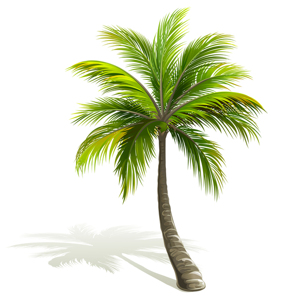 Realistic Palm Tree Illustration Vectors 02 Free Download