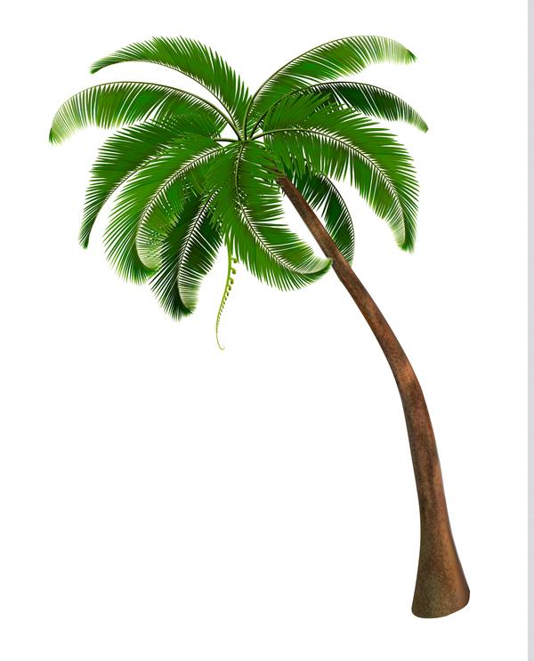 Realistic palm tree illustration vectors 03