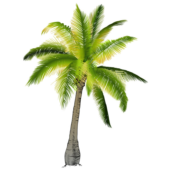 Realistic palm tree illustration vectors 04