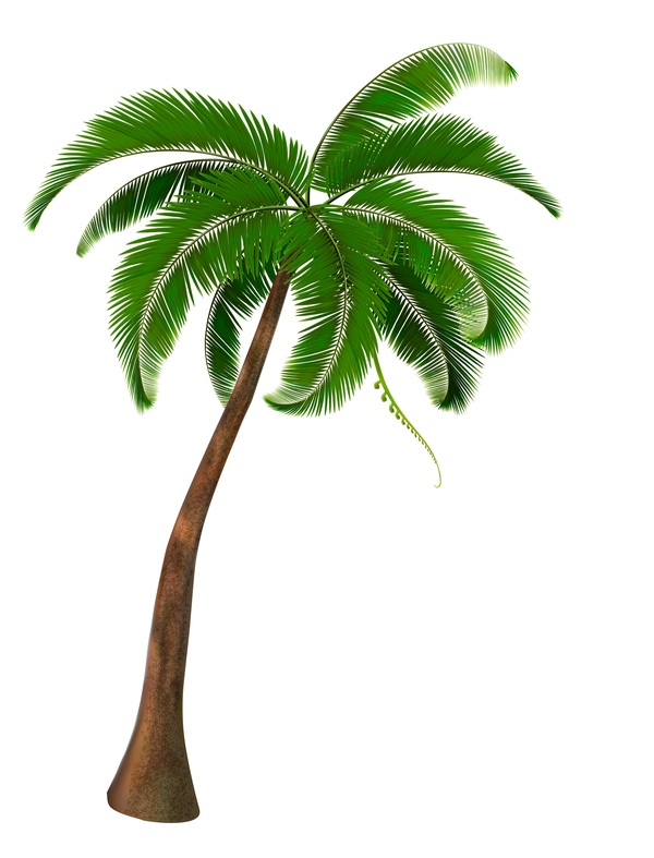 Realistic palm tree illustration vectors 06