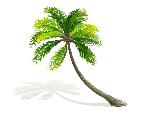 Realistic palm tree illustration vectors 07