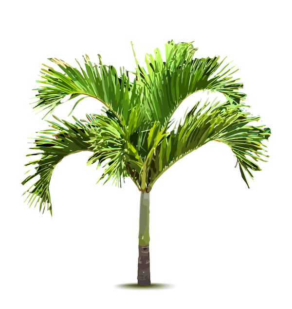 Realistic palm tree illustration vectors 08