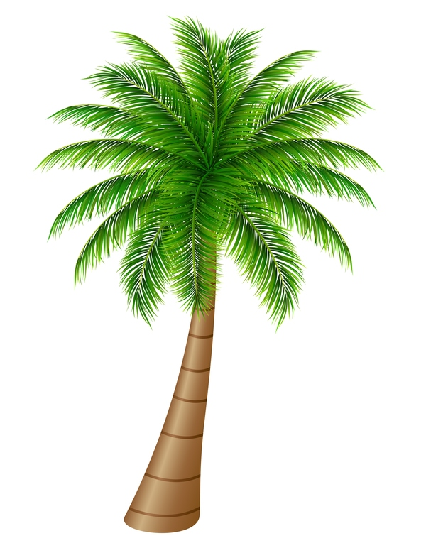 Realistic palm tree illustration vectors 09