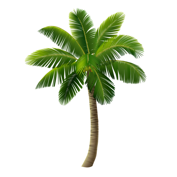Realistic palm tree illustration vectors 10