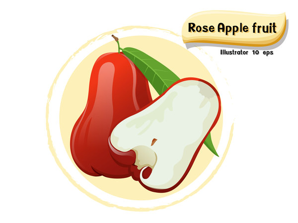 Rose apple fruit illustration vector