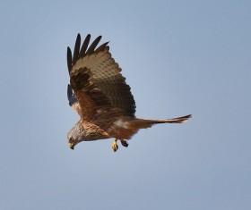 Sky eagle soar HD picture