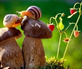 Snail macro photography Stock Photo
