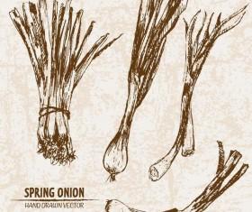 Spring onion hand drawing retor vector 01
