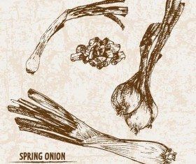 Spring onion hand drawing retor vector 02