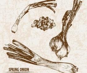 Spring onion hand drawing retor vector 02