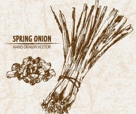 Spring onion hand drawing retor vector 03