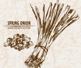 Spring onion hand drawing retor vector 03