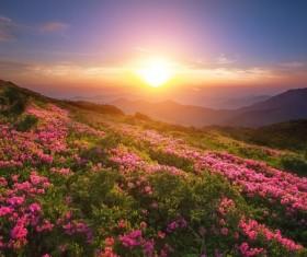Sunrise photo of flower fields around Stock Photo