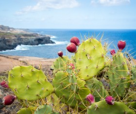The cactus of the sea HD picture