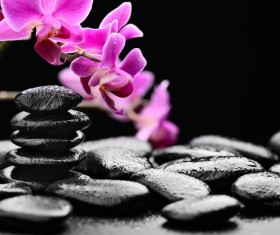 Zen stones and bamboo orchids Stock Photo 03