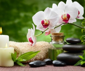 Zen stones and bamboo orchids Stock Photo 04