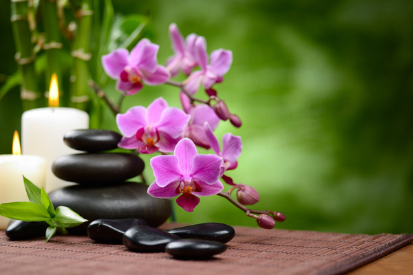 Zen stones and bamboo orchids Stock Photo 05