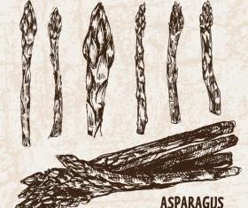 asparagus hand drawing retor vector 01