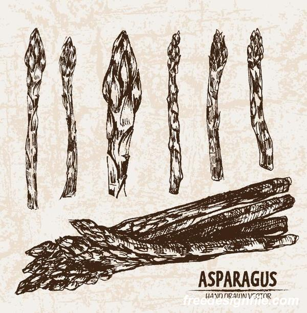 asparagus hand drawing retor vector 01