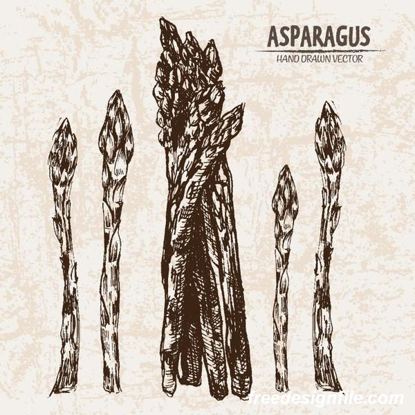 asparagus hand drawing retor vector 02