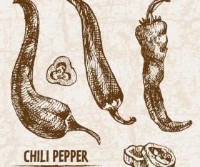 chili pepper hand drawing retor vector 03