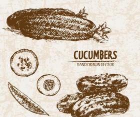 cucumbers hand drawing retor vector 01