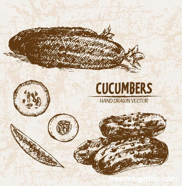 cucumbers hand drawing retor vector 01