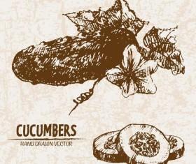 cucumbers hand drawing retor vector 02