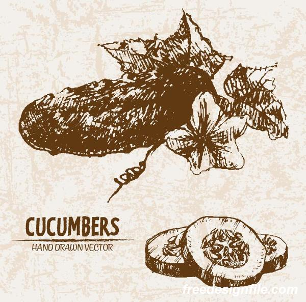 cucumbers hand drawing retor vector 02