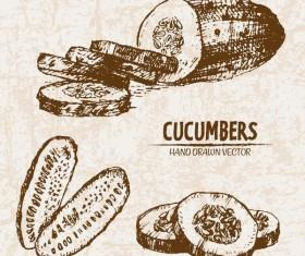 cucumbers hand drawing retor vector 03