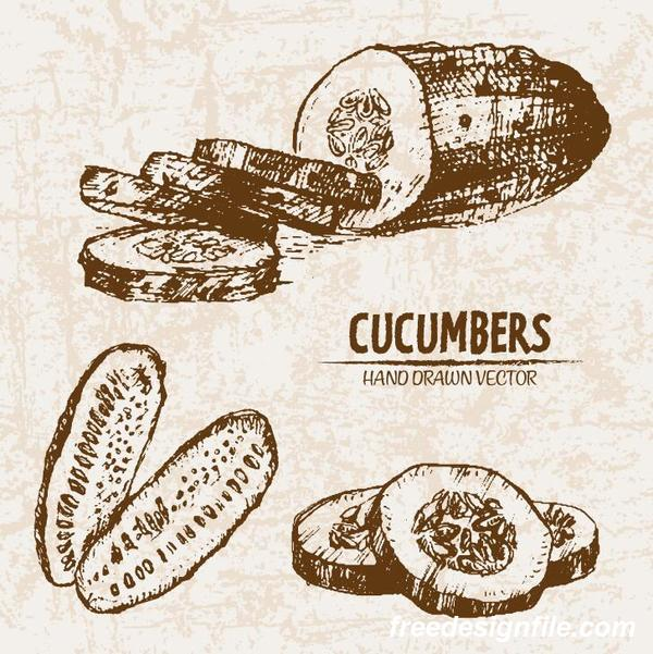cucumbers hand drawing retor vector 03